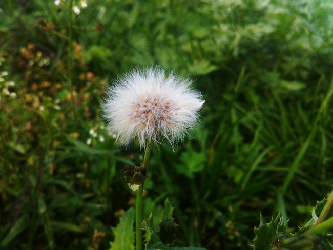Flower Plant Nature Flower Head Green Color Day Single Flower Close-up Focus On Foreground Beauty In Nature Freshness