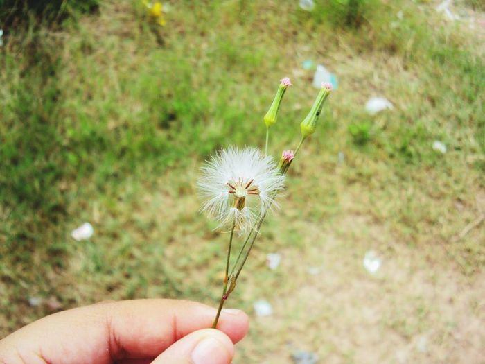 Natureza bela