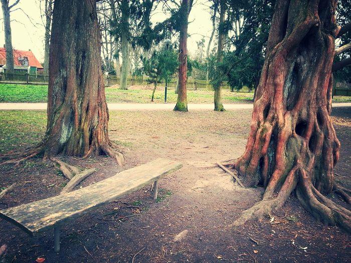Botaniska Trädgården Trädgården Park Trees Bench Lund