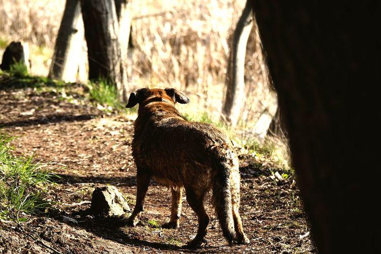 Lakeside Hike Dog Adventure Dog Shadows & Lights Nature Shadow Sunlight Tree Animal Themes Grass