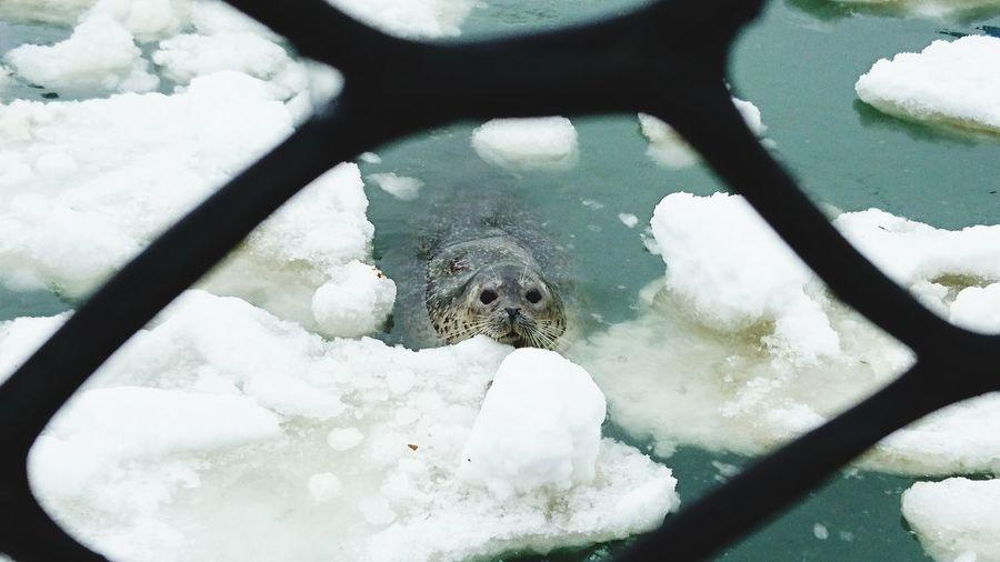 Animal Winter