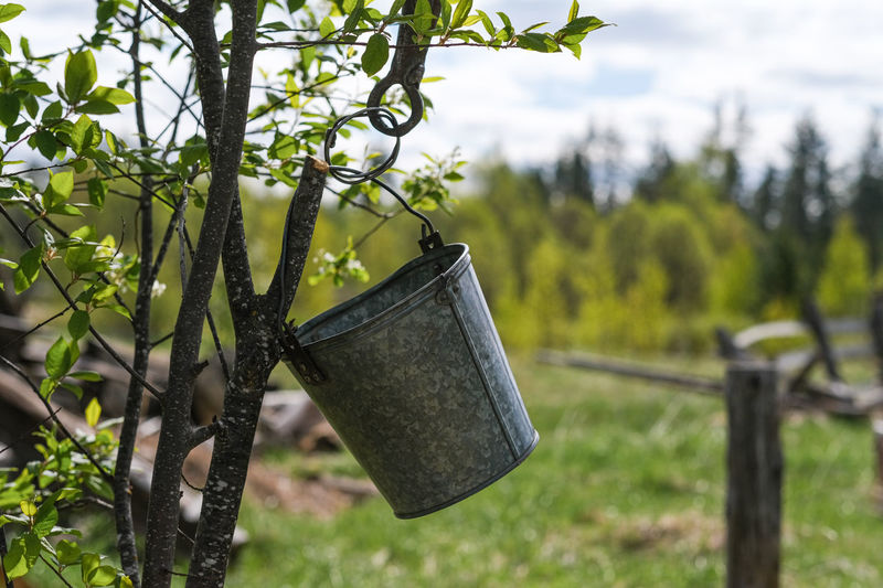 Plant Growth Tree Focus On Foreground Nature Hanging No People Day Green Color Metal Outdoors Land Field Close-up Leaf Can Container Beauty In Nature Watering Can Plant Part Gardening