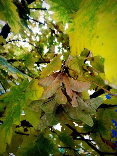 Wet Leaves After A Rain Autumn Autumn Colors красота Close-up Outdoors No People Beauty In Nature Nature после дождя  осенние листья Orange Acacia