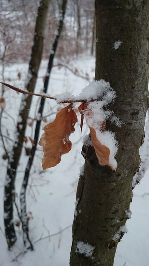 Showcase: January Winter Wonderland