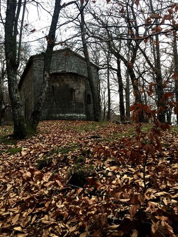 Chiesa Bosco Church Wood Medioevo Middleage Autumn Autunno