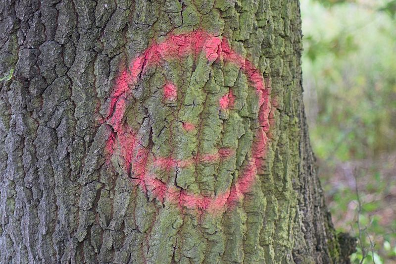 Smile Plant Tree Growth Trunk Nature Tree Trunk Green Color Pink Color Day No People Outdoors Textured  Positive Emotion Creativity Close-up Beauty In Nature Emotion Art And Craft