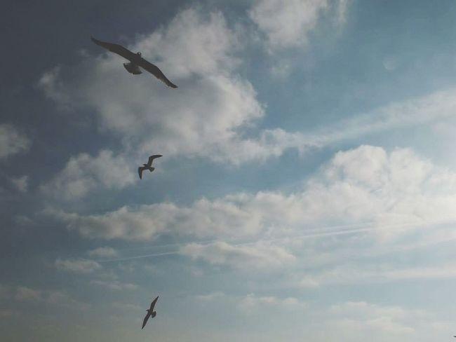 Flying Cloud - Sky Sky Low Angle View Bird Mid-air Animal Themes