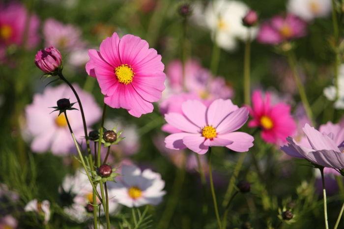 Japan Kobe 兵庫 神戸 花 Flower 蝶々