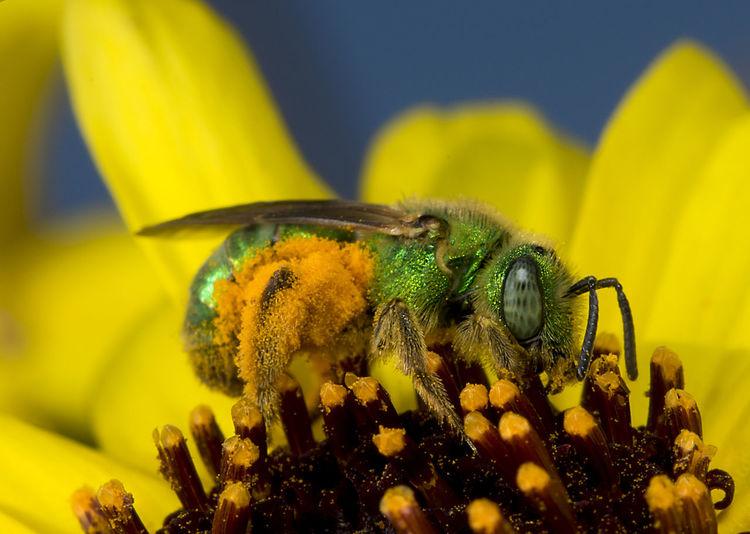 Bee 🐝 Green