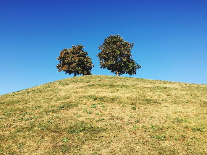 Low angle view of trees growing on hill against clear sky