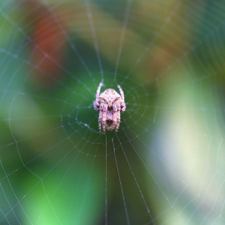 Spider Spider Web Macro Beauty Macro_collection Point Of View Daytime Photography Macro Macro Nature Love In Nature Nature Photography Nature_collection
