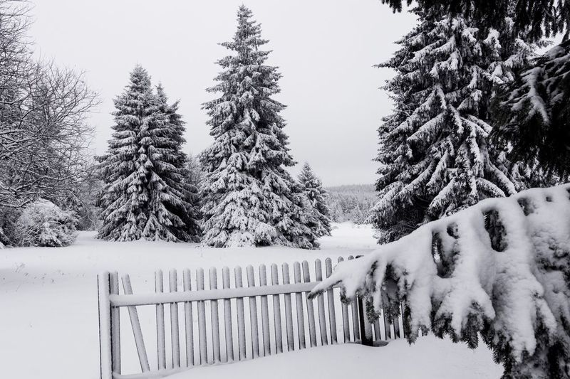 Snow Winter Cold Temperature Weather Nature Tree Railing White Color Outdoors Beauty In Nature Snowdrift Frozen Day Extreme Weather Landscape Snowing No People Tranquility