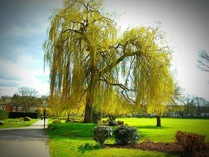 Taken by me on my Nikon S3200 2 days ago. Spring Nature FaringdonPark Swindon Wiltshire Uk Europe 2016