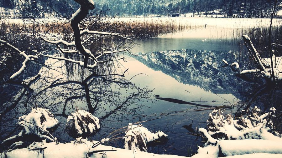 Nature Winter Snow Cold Temperature Tree Tranquil Scene No People Tranquility Bare Tree Landscape Lake Beauty In Nature Outdoors Frozen Day Water Dead Tree