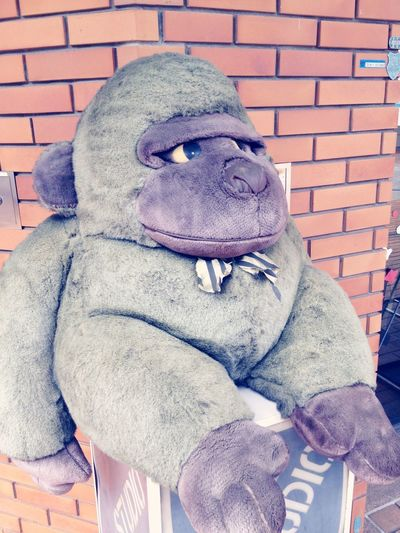 In Front Of Barber Shop Keeper Brick Doll Gorilla One Animal Outdoors