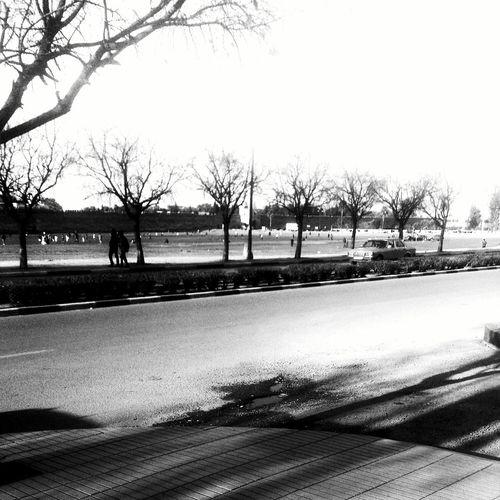 City Avenue Trees Black & White Xperia S Walking
