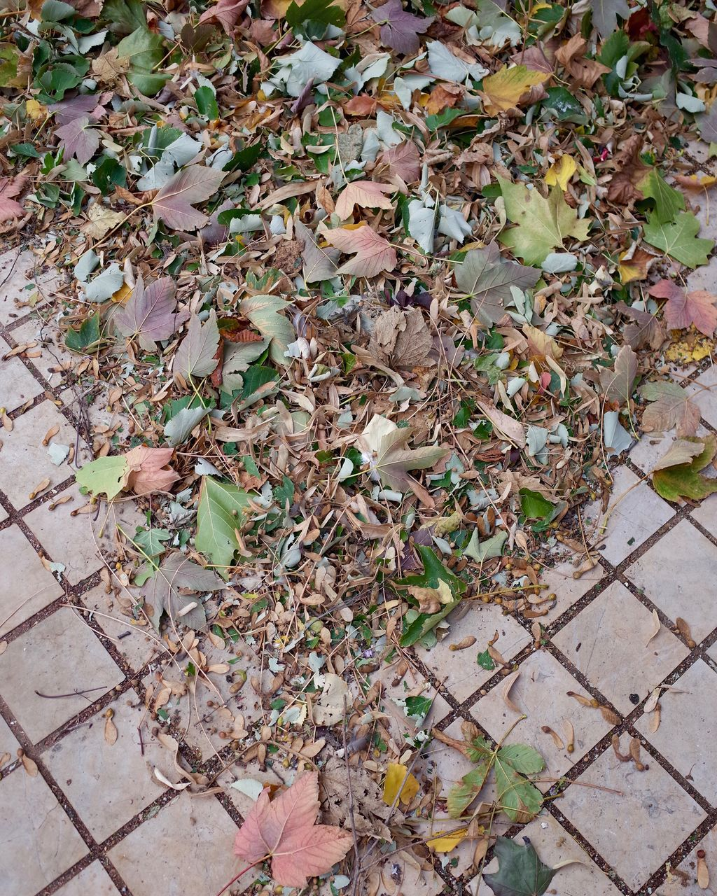 leaf, autumn, change, leaves, dry, nature, high angle view, fallen, day, outdoors, abundance, no people, plant, fragility, beauty in nature, maple, close-up