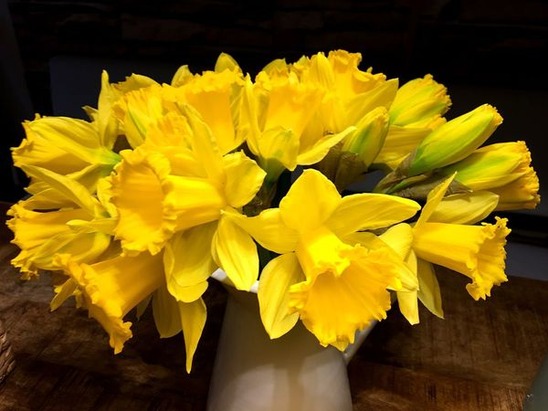 Osterblumen, Narzissen, gelb, yellow, Farbflash, flowers, Narcissus Flower Flowering Plant Vulnerability  Yellow Fragility Freshness Petal Flower Head Beauty In Nature Close-up Plant Vibrant Color Flower Arrangement