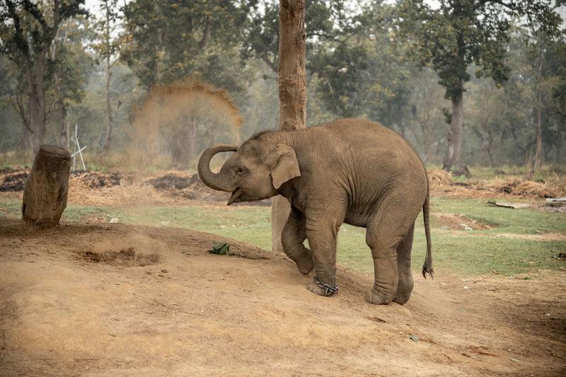 Elephant walking in a zoo