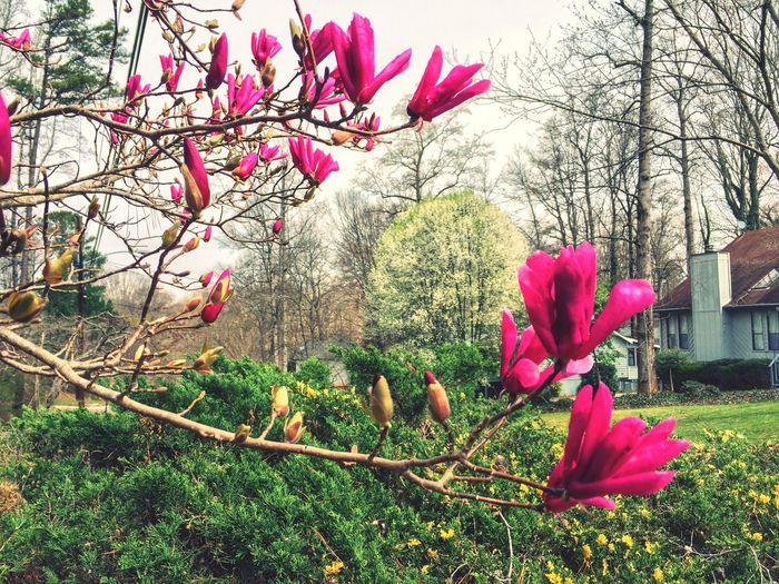 Spring Blossoms Tadaa Community Nature