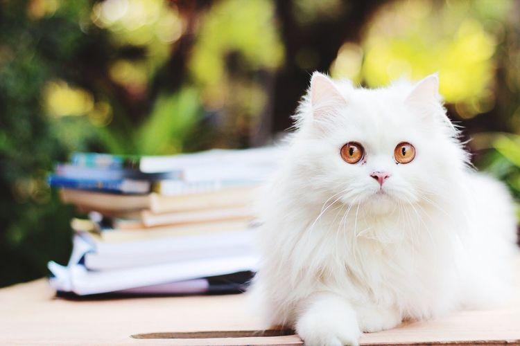 Portrait of white cat