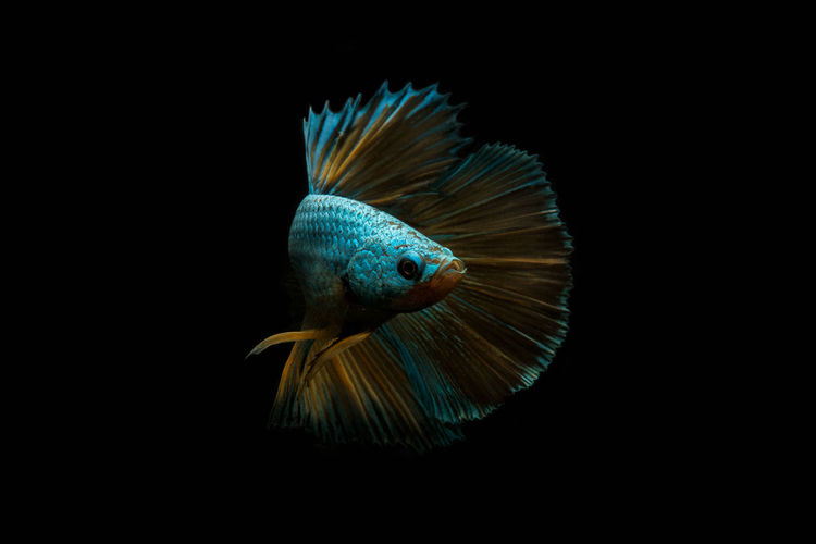 Fish Against Black Background