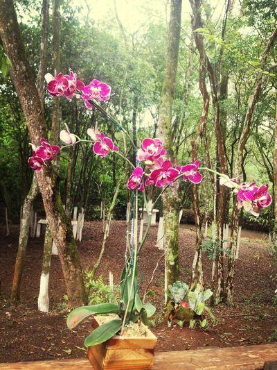 linda orquidea!