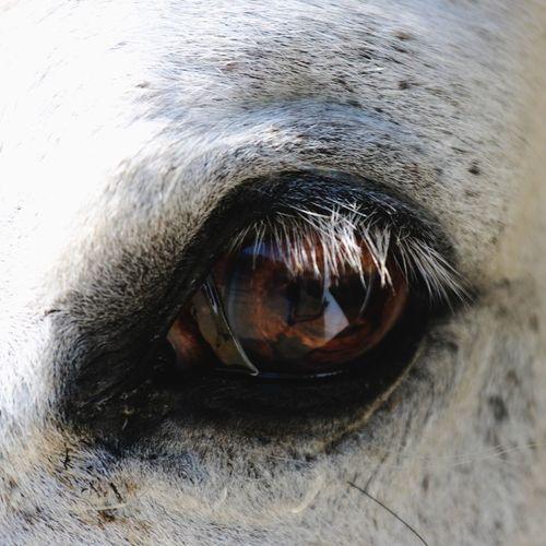 Horse Eye Horse Eye Horse Photography  Horses Animal Photography Animal White