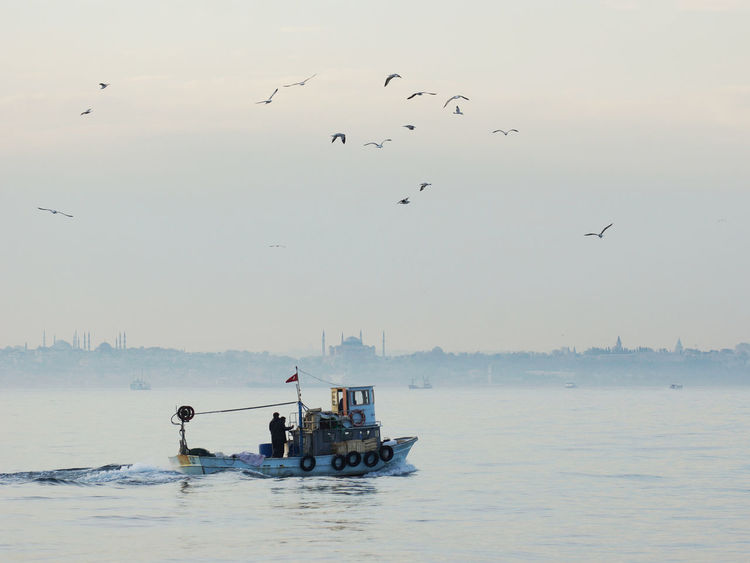 Homeward bound on the Sea of Marmara Animal Themes Animal Wildlife Animals In The Wild Beauty In Nature Bird Blue Mosque Catch Day Fisherman Fishing Fishing Boat Flock Of Birds Flying Hagia Sophia Homeward Bound Istanbul Nature Nautical Vessel Outdoors Return Returning Home Sea Of Marmara Turkey Twilight Water