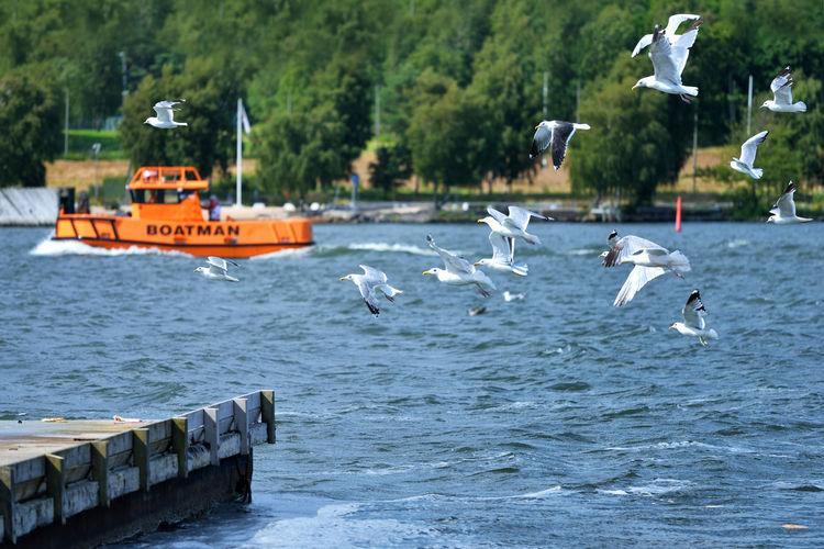 Gulls Water Flying Bird Travel Day Pier Outdoors Gothenburg Seagull Sweden Europe Scandinavia No People Göteborg, Sweden Gothenburg, Sweden SE752_GOTHENBURG_AK SE752_SWEDEN_AK