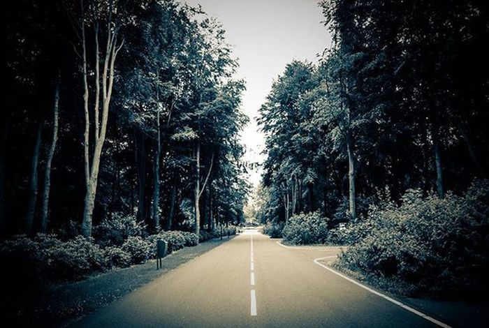 Forest Trees Photographer Pictures Pic Canond500 Canon500d Vscocamphotos Instagram Instalike Myeyes Myworld Myview