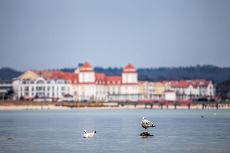 Seagulls at beach against buildings