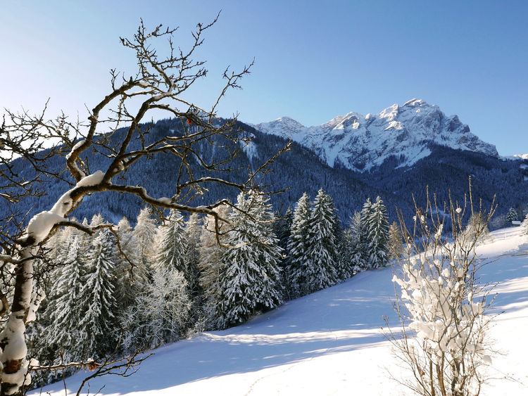 Background Bare Tree Blue Cold Temperature Frozen Mountain Mountain Range Scenics Snow Snowcapped Mountain Sunlight Tranquil Scene Tranquility Val Pusteria White Color Winter