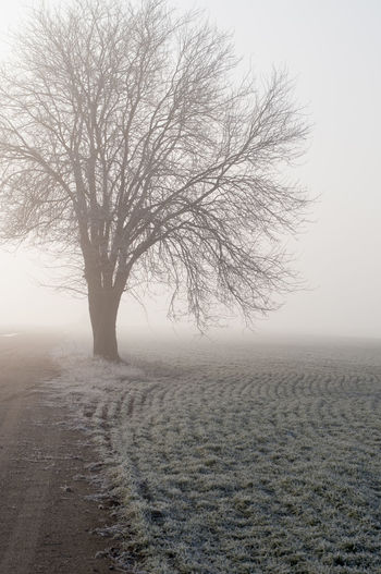 Tree Bare Tree Tranquility Landscape Plant Environment Beauty In Nature Fog Tranquil Scene Sky Scenics - Nature No People Field Winter Cold Temperature Nature Non-urban Scene Solitude Outdoors Isolated