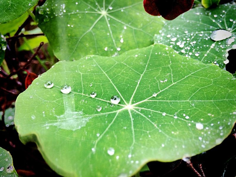 Leaves Rain Rainy Day Pioggia Gocce Di Pioggia Cade La Pioggia Foglie Acqua