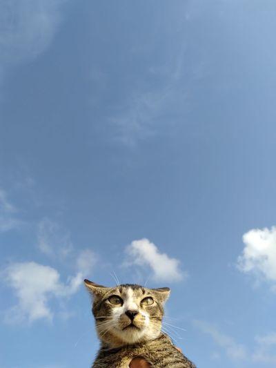 Portrait of cat against sky