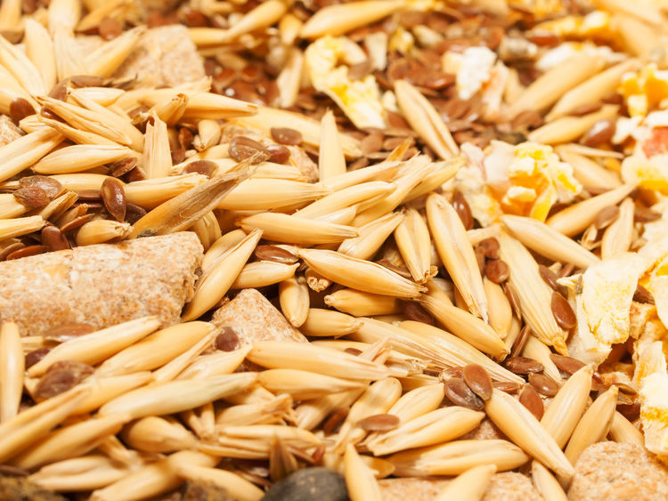 Backgrounds Cereal Plant Close-up Day Food Food And Drink Freshness Full Frame Grain Healthy Eating Indoors  Muslie No People Raw Food Seed Wheat Whole Wheat Wholegrain