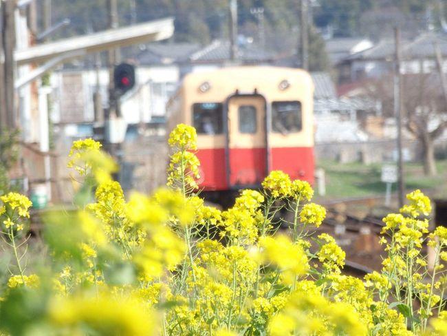 Train 小湊鉄道 Flawer Railway