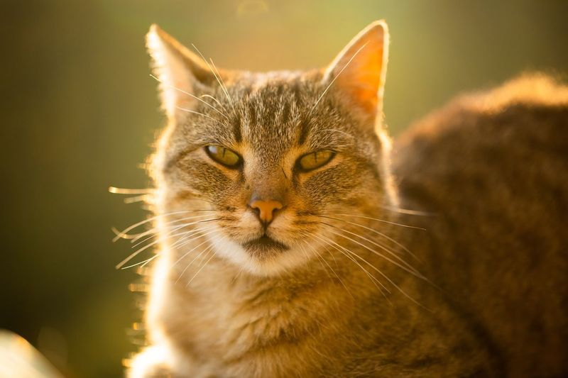 Cats know how to chill Cat Feline Animal Themes Domestic Cat Mammal Animal Pets Domestic Animals One Animal Domestic Animal Body Part Close-up Whisker Animal Head  No People Vertebrate Focus On Foreground Relaxation Portrait