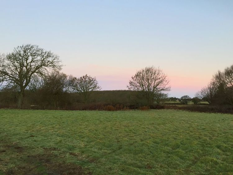 Tree Nature Tranquil Scene Tranquility Grass Field Landscape Beauty In Nature No People Bare Tree Scenics Outdoors Rural Scene Morning Light Dawn Of A New Day Walk