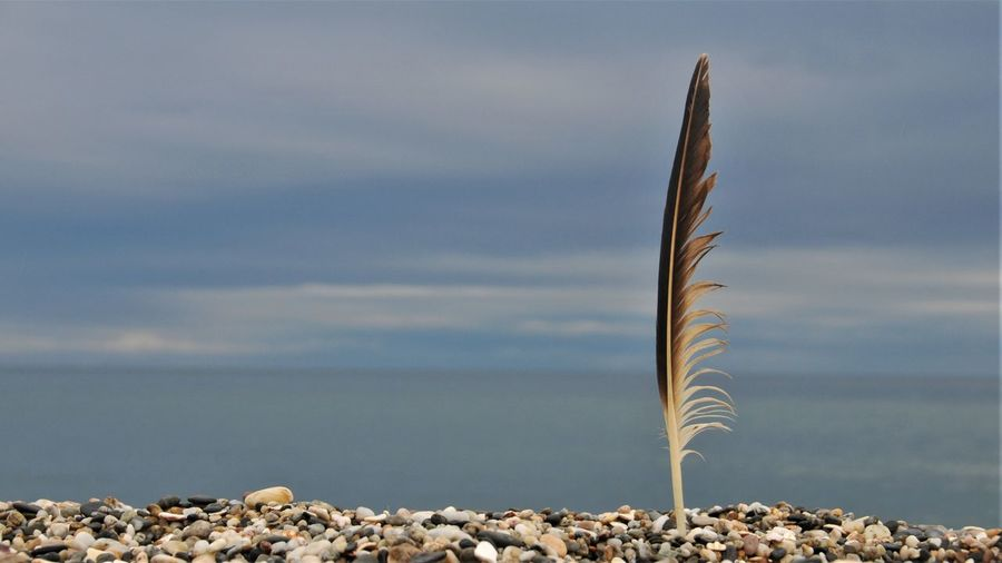 Close-up of feather against sea