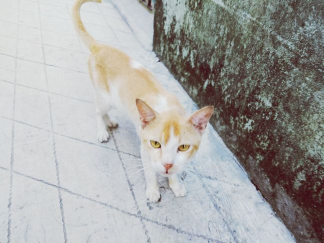 EyeEm Selects Pets Domestic Cat Domestic Animals Animal Themes Looking At Camera Mammal Feline Portrait High Angle View One Animal Animal Ginger Cat No People Day Sitting Kitten Outdoors Nature Sommergefühle Animals In The Wild Nature Animal Wildlife
