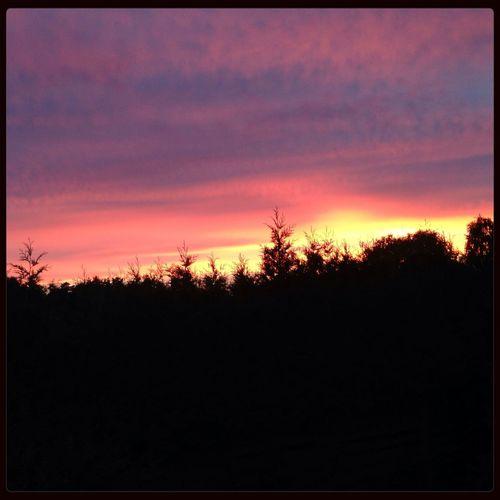 Sunset Enjoying The View