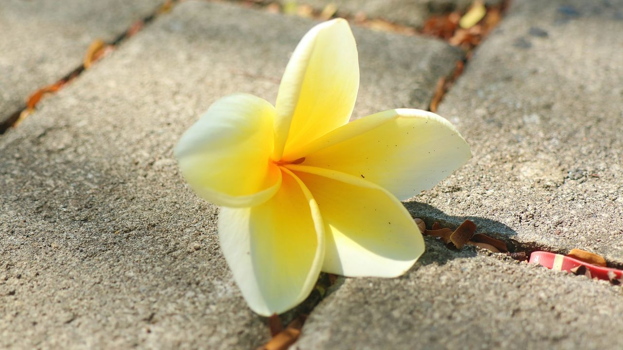 HIGH ANGLE VIEW OF YELLOW FLOWER