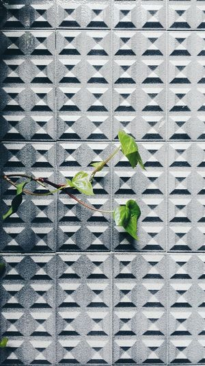 Minimalism Green Grey Alone Hanging Nature Urban Color Burst Color Block Burst Contrast Plant Survivor Leaves Geometry Geometric Shapes