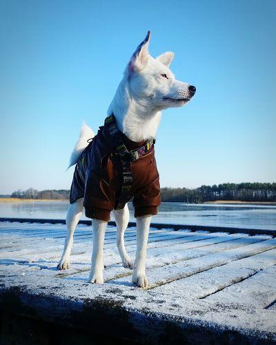 Sky Whitedog Mixdog Mongrel Mutt Dogeyes Winterdogs One Animal Pets Dog Animal Animal Themes Domestic Animals Beach Day Outdoors Sky Water Nature