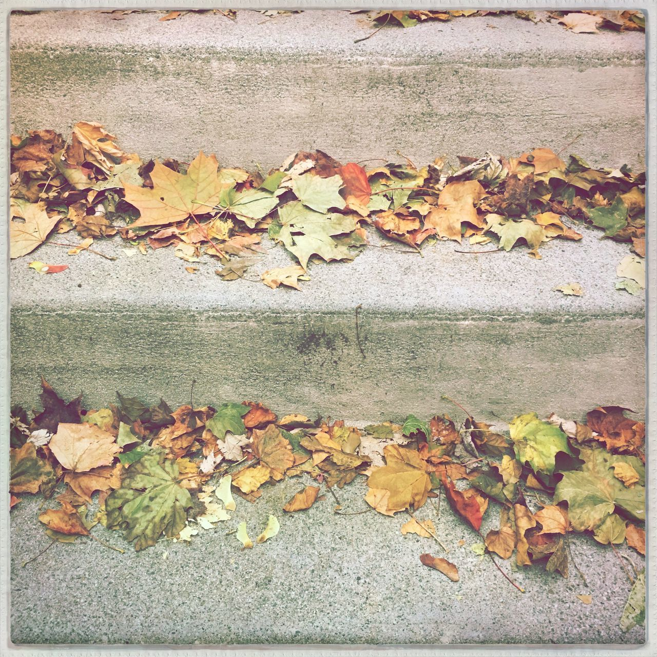 change, autumn, leaf, dry, leaves, fallen, maple leaf, nature, maple, fall, outdoors, day, fallen leaf, no people, abundance, close-up, beauty in nature, fragility