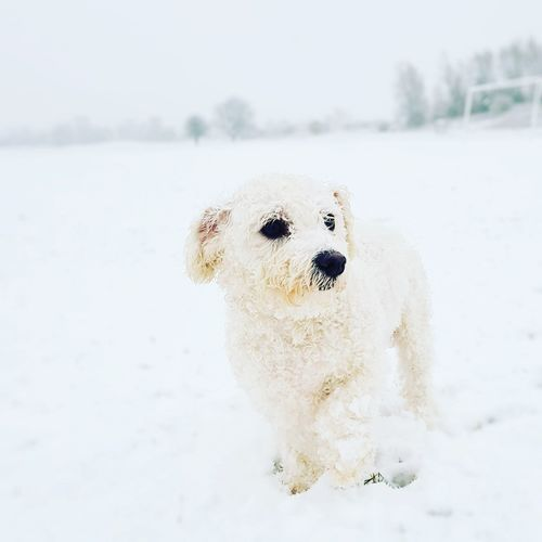Winter Dog Cold Temperature Beach Day Snow Outdoors No People Pets Nature Mammal