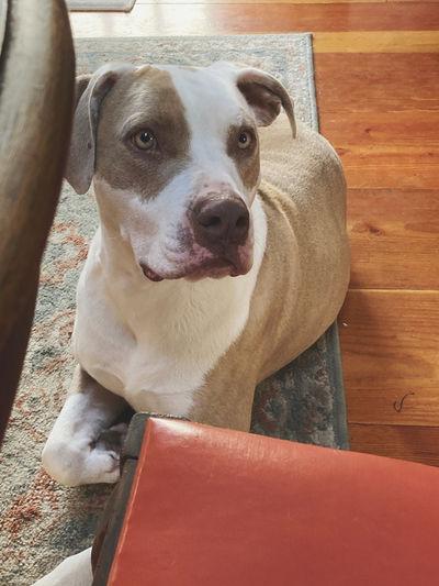 High angle portrait of dog sitting on floor