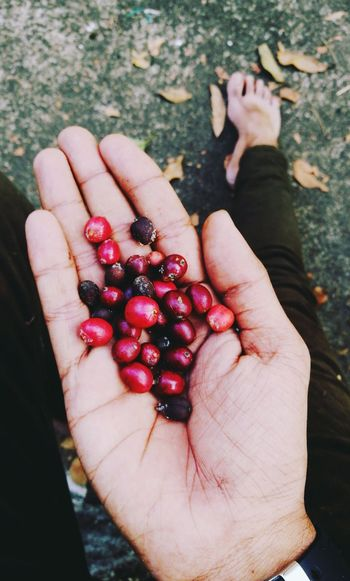 Coffee Beans Human Hand Human Body Part Fruit One Person Holding People Healthy Eating Food And Drink High Angle View Red Outdoors Day Only Women Adult Food Lifestyles Close-up Freshness Women One Woman Only Fashion Stories EyeEmNewHere
